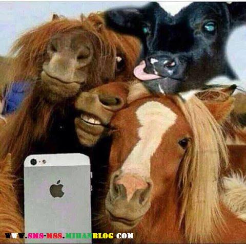 عکس خنده دار،عکس طنز،عکس اسب بامزه،عکس گاو بامزه،عکس دخترای گروه،عکس بامزه فیس بوکی،عکس طنز و خنده دار،عکس دختر ناز و خوشگل،عکس سلفی