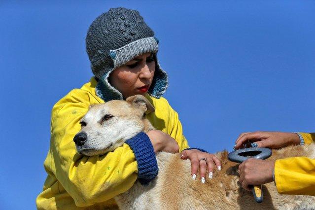 پناهگاه حیوانات وفا