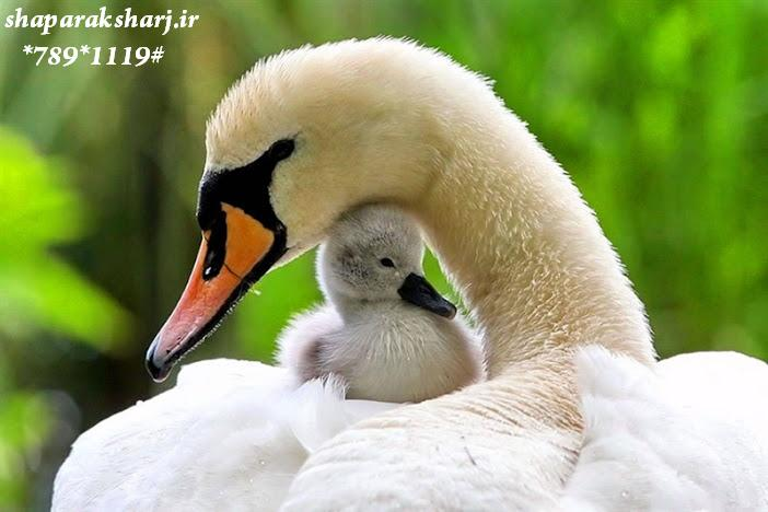 عکس-زیبا-عاشقانه-جالب-فانتزی-طبیعت سری 2