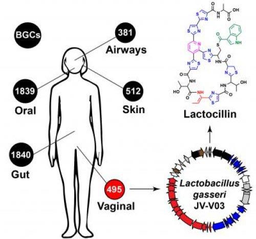 http://s5.picofile.com/file/8167826050/lactocilin.jpg