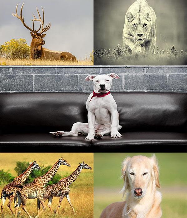 دانلود عکس های فوق العاده زیبا از حیوانات