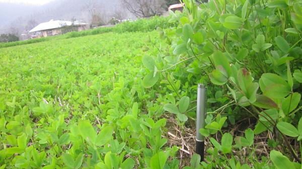 ماسال نیوز کشت دوم در روستای سیاهمرد شاندرمن - شهرستان ماسال