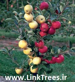 خرید پستی فیلم آموزشی تکنیک های پیوند زنی درختان   آموزش پیوند درخت های میوه - سایت آموزش پیوند زدن درختان   2812 181 0919   سایت آموزش پیوند درختان www.LinkTrees.ir