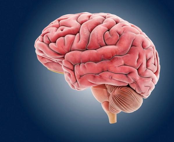 تمرین ریاضی یا ورزش، کدام در محافظت از مغز موثرترند؟