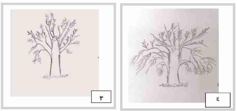 جوان کردن درختان بلند