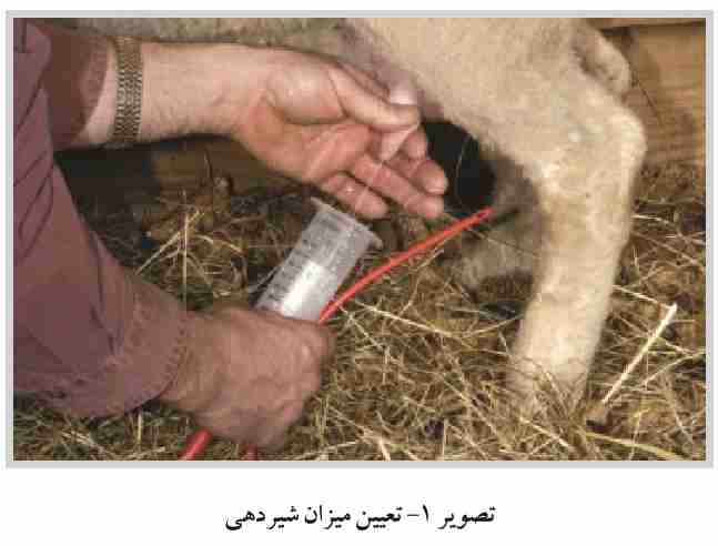 تعیین میزان شیردهی