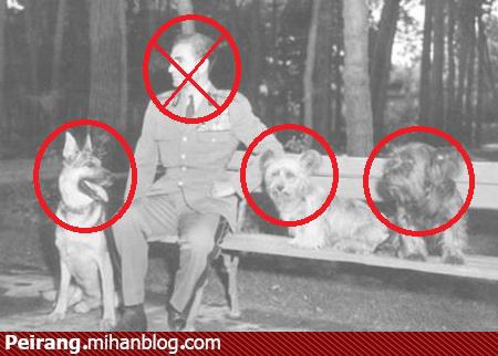 سگ ها به شاه خائن شرف داشتند