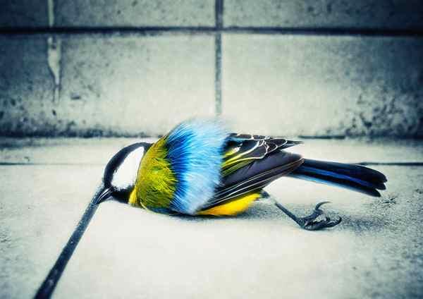 پرنده مرده