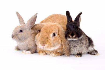 پرورش خرگوش
