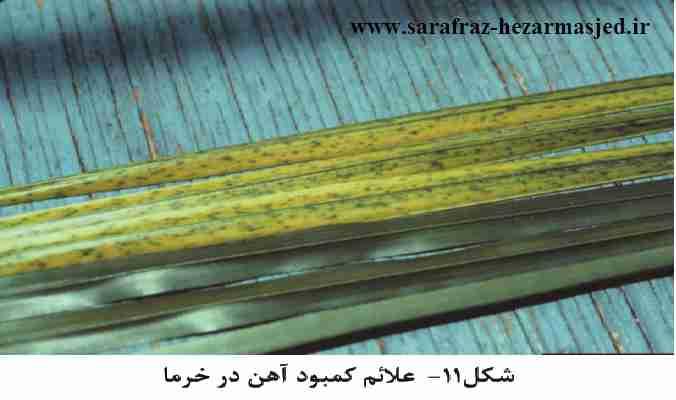 علایم کمبود آهن در خرما