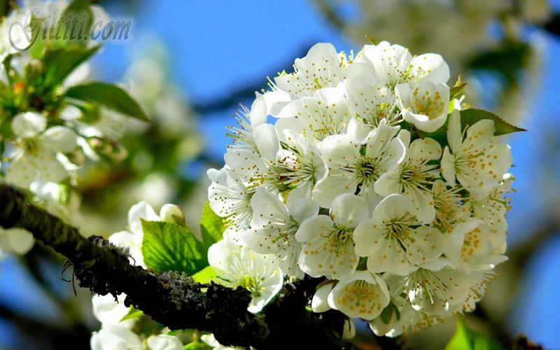 http://s5.picofile.com/file/8288230626/bahar_l.jpg
