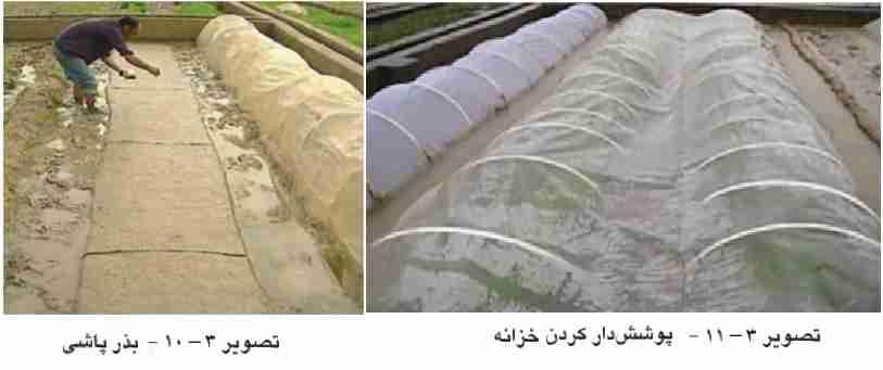بذر پاشی در خزانه و پوشش دار کردن خزانه