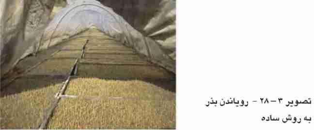 رویاندن بذر به روش ساده