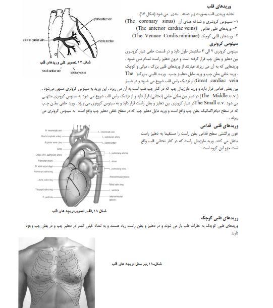 آناتومی دستگاه قلب وعروق - قلب -  دانلود جزوه دستگاه قلب و عروق پرستاری pdf