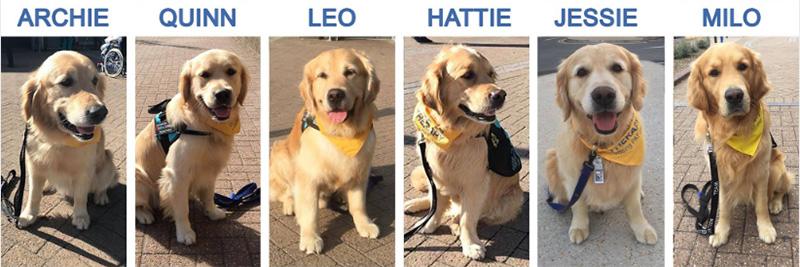ببینید چگونه این سگ های شگفت انگیز داوطلبانه درمانی به بیماران بیمارستان کودکان کمک می کنند