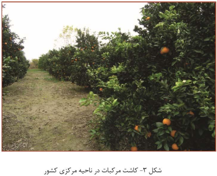 کاشت مرکبات در نواحی مرکزی ایران